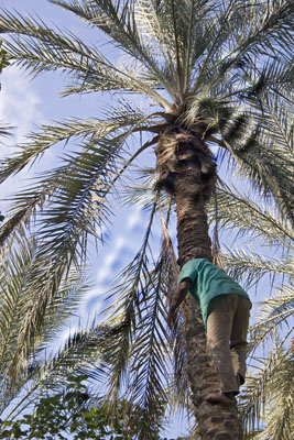 Debajo de la palmera 229_amc00545